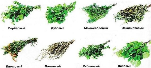 Разнообразие банных веников