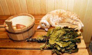 Сроки заготовки дубовых веников для бани