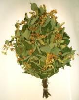 Липовый веник, особенно собранный в период цветения, придаст банной атмосфере неповторимый аромат