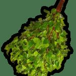 Веники березовые