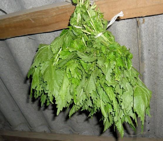 В веник из крапивы можно добавить пару веток березы или смородины