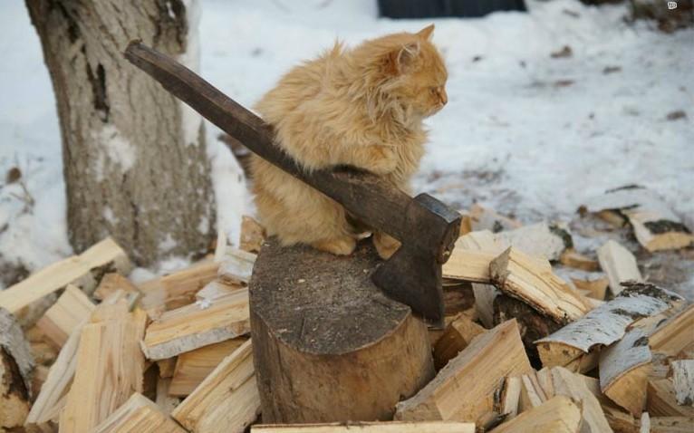 Выбирайте дрова из ольхи и березы