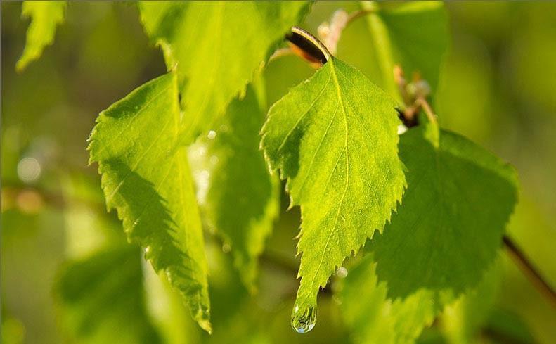 На листьях капли дождя? Отложите заготовку на некоторое время