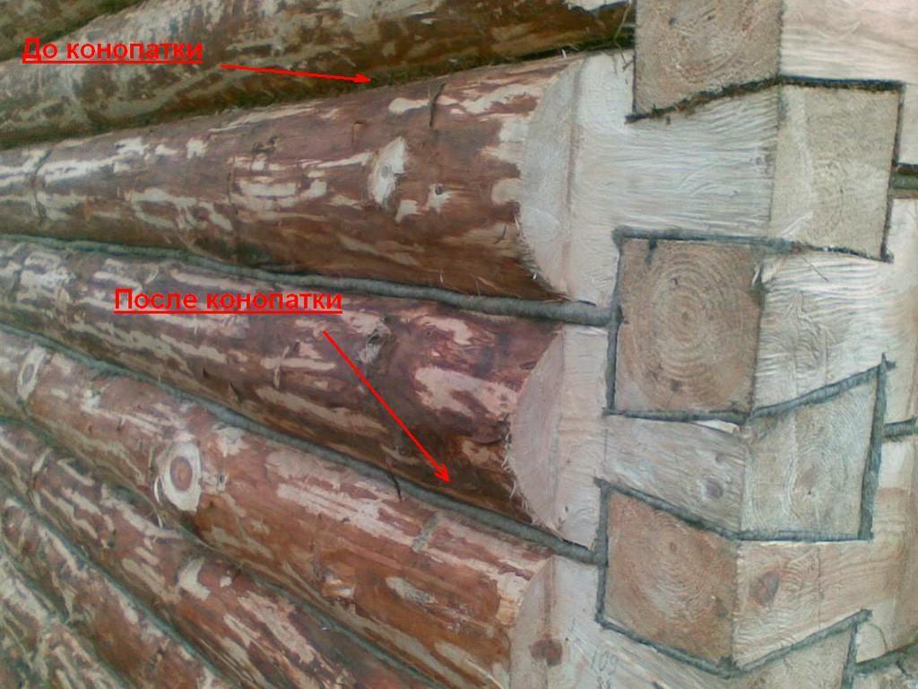 До и после конопатки сруба из окорённого бревна