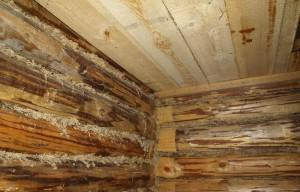 Настильный потолок по венцам сруба - фото