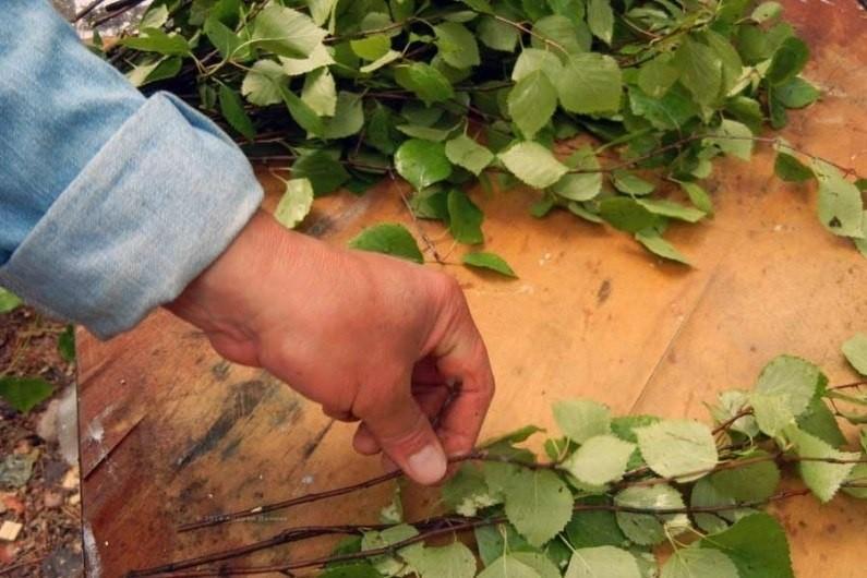 Заготовка веточек березового веника