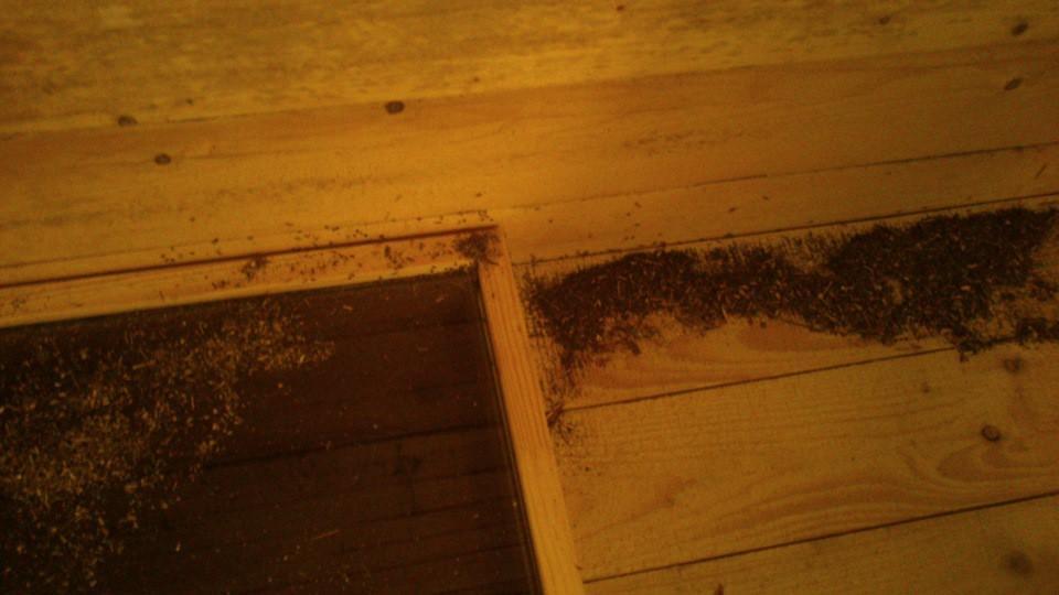 Снова муравьи