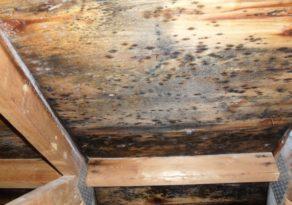 Плесень на деревянных конструкциях опасна для их целостности и для здоровья людей