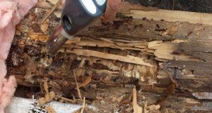 Муравьи прокладывают ходы в бревенчатых стенах, что тоже способствует разрушению строений