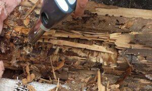 Как избавиться от муравьёв в бане